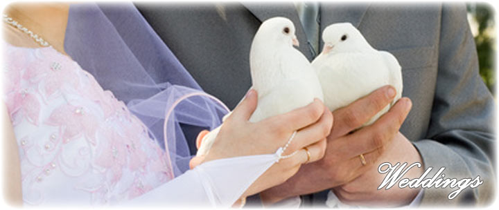 White Dove Releases for Weddings and Anniversaries